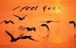 Seagull Water Orange Free Freedom Feeling See