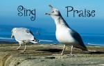 sing praise seagull