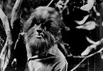 Alex Stevens werewolf Dark Shadows 1969